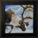 Jason Kamin - Enduring Hardship (Woodland Caribou) - Oil - 8x8 (framed) - 2012